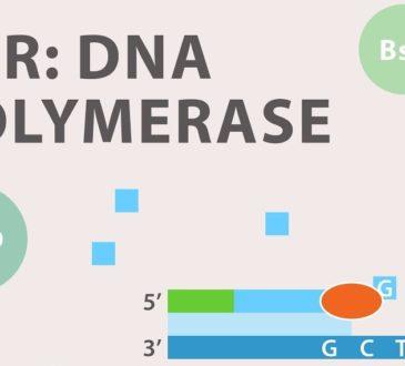 Polimeraz zincir reaksiyonu ( PCR ) nedir ?